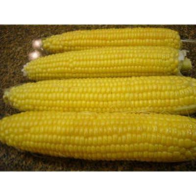 Imp Golden Bantam 12 Row Sweet Corn Seeds (80 Seed Pack) : Garden & Outdoor