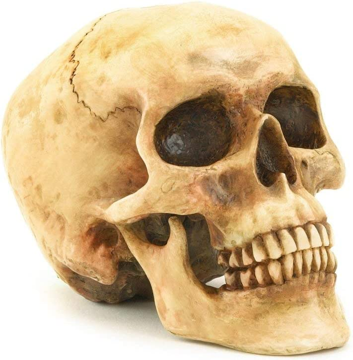 Statua realistica a forma di testa di teschio con scheletro umano VOANZO bar decorazione da tavolo per Halloween modello di osso