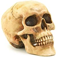 Gifts & Decor Realistic Halloween Skeleton Skull with Horns, Human Replica Anatomical Statue