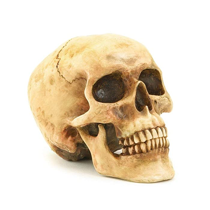 Gifts & Decor Grinning Realistic Replica Human Skull Home Statue (36245)