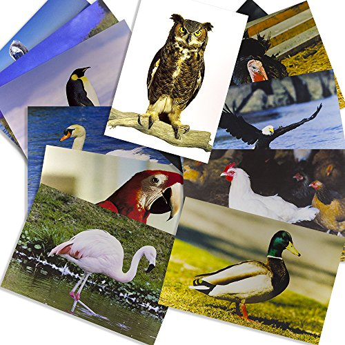 Stages Learning Materials Birds Posters for Education Classroom Real Photo Decor for Preschool Bulletin Boards & Circle Time 14 Large Picture Cards