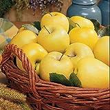 Golden Treat Apple Tree 10 Seeds UPC 648620997920 Lightly-tart fruit
