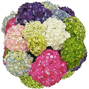 GlobalRose 10 Hydrangeas varieties 120