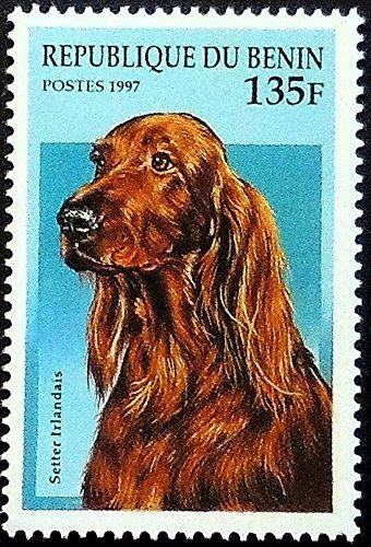 Irish Setter Dog Setter irlandais -Handmade Framed Postage Stamp Art 10618AM
