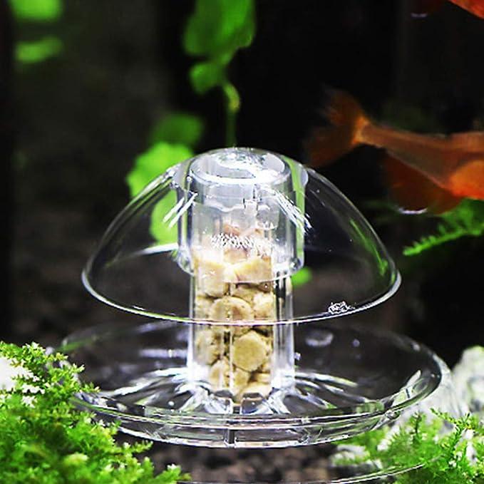POPETPOP Colector de Trampa de Caracoles Transparente para el Acuario de Plantas de Peces de Acuario planario Receptor de sanguijuelas (tamaño L): ...