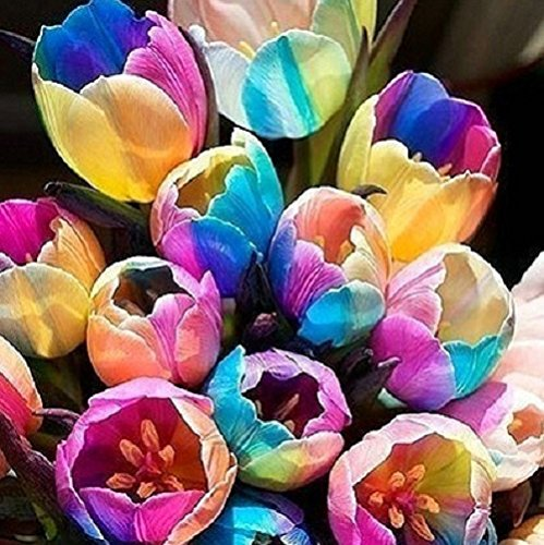 10 pcs Tulip Bulbs (Not Tulip Seeds), 19 colors available Tulips Variety Fresh Bulbous Root Flower Corms Planted (12)