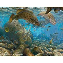Fall Frenzy Smallmouth Bass by Mark Susinno Limited Edition Print of 750 Signed & Numbered