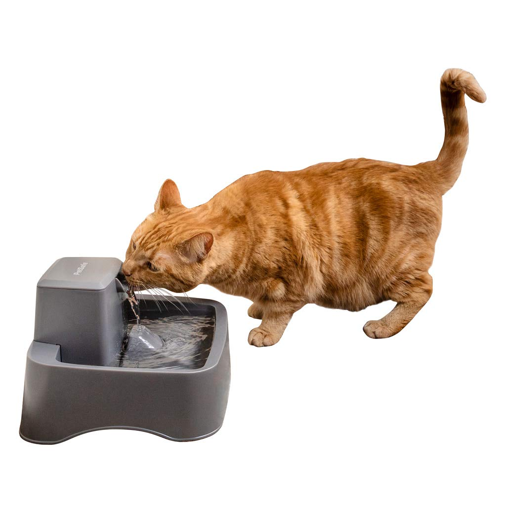 PetSafe Drinkwell ½ gallon Pet Fountain, Best for Small Dog & Cat Households, Easy-to-Clean Design, Filter Included by PetSafe