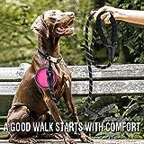 COOYOO 2 Pack Dog Leash 5 FT Heavy Duty