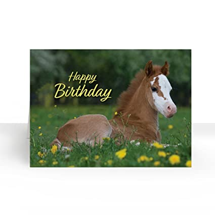 Amazon pack of 25 wall street greetings birthday dandelion pack of 25 wall street greetings birthday dandelion foal 5x7 fold over greeting card with 25 m4hsunfo