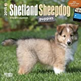 By BrownTrout Shetland Sheepdog Puppies 2015 Mini 7X7 (Min) [Calendar]