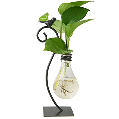 Marbrasse Desktop Glass Planter Hydroponics Vase, Planter Bulb Vase with Holder for Home Decoration, Modern Creative Bird Plant Terrarium Stand, Scindapsus Container : Garden & Outdoor