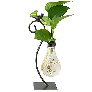 Marbrasse Desktop Glass Planter Hydroponics Vase,Planter Bulb Vase with Holder for Home Decoration,Modern Creative Bird Plant Terrarium Stand, Scindapsus Container