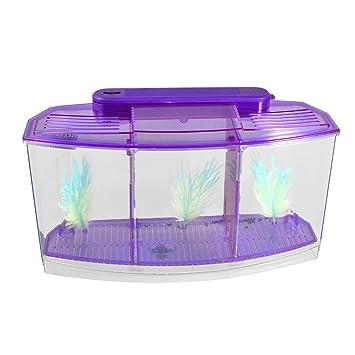 TOOGOO(R) Acuario de peces de escritorio mini lampara LED con bateria de plastico purpura claro: Amazon.es: Hogar