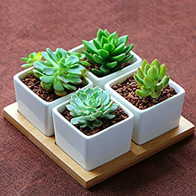 Mr. Garden 4Pack Decorative Mini White Ceramic Planter Pot / Window Box with Wooden Saucer: Garden & Outdoor