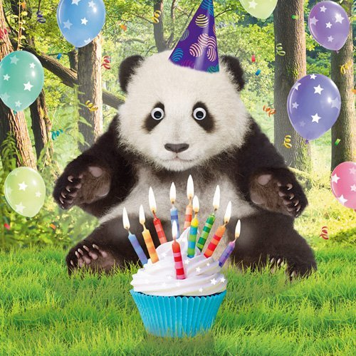 поздравление с днем рождения с пандами сделать кликабельную