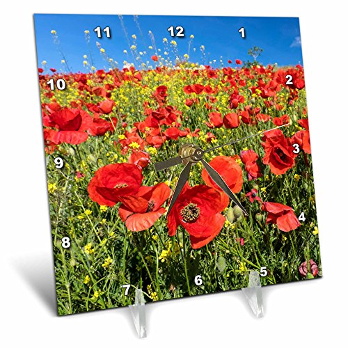 3dRose Danita Delimont - Flowers - Spain, Andalusia. A field of bright and cheerful red poppy wildflowers - 6x6 Desk Clock (dc_277891_1) by 3dRose