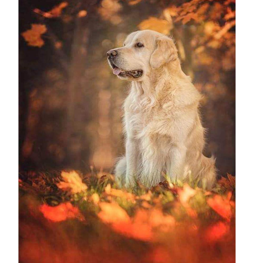 Gaepni DIY digitales /ölgem/älde f/ür Bild Tier golden Retriever hundekunst leinwand Kinder Schlafzimmer dekor