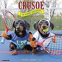Crusoe the Celebrity Dachshund 2019 Wall Calendar (Dog Breed