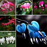 Solution Seeds Farm Heirloom Mixed Lamprocapnos Spectabilis Bleeding-heart Flower Seeds,Rare Dicentra Spectabilis Mixed Bleeding Heart Seeds, 5 seeds
