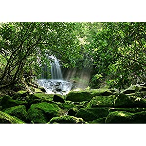 Reptile Habitat, Terrarium Background, Sunny with Green Trees, Waterfall & Mossy Rock (Various Sizes) 49