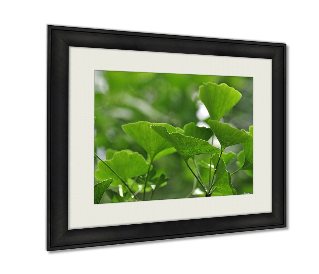 Ashley Framed Prints Ginko Leaves Art photography interior design artwork framed office 24x30 art