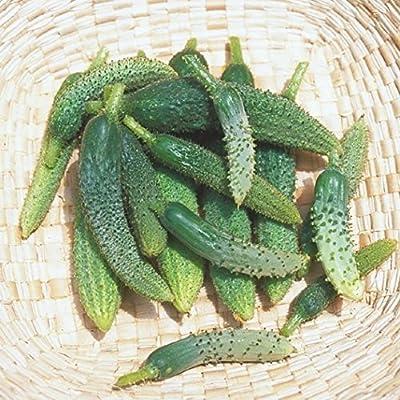 Cucumber Seeds- Paris Pickling Heirloom- 50+ Seeds