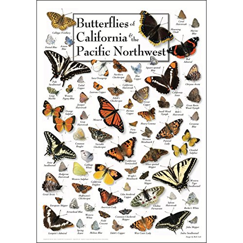 Earth Sky & Water Poster - Butterflies of California & Pacific Northwest -