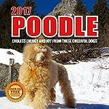 2017 Poodle Calendar- 12 x12 Wall Calendar - 210 Free Reminder Stickers