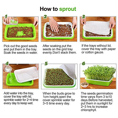 Seed Sprouter Trays with 4 Layers Shelf Soil-Free Healthy Wheatgrass Seeds Grower & Storage Trays for Garden Home by LeJoy Garden (Image #7)