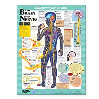 Blueprint for health your brain and nerves chart anatomical chart blueprint for health your brain and nerves chart malvernweather Images