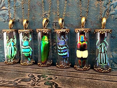 Real insect jewelry Glass terrarium necklace Taxidermy jewelry Jewel Beetle pendant Real Bug jewelry Science jewelry Entomology Strange gifts