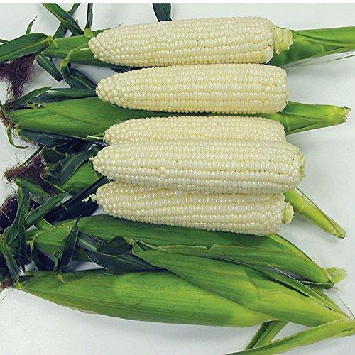 David's Garden Seeds Corn Sweet Sugar Pearl SL112 (White) 100 Hybrid Seeds (Hybrid Corn Seed)