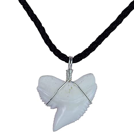 c1556cdd4ce10 GemShark Real Tiger Shark Tooth Necklace Sterling Silver Charm Pendant for  Boys Girls Unisex Sharks Jewelry (1.0 in Tiger Shark)
