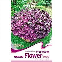 Red Wood sorrel Seed(Bulb) * Red Oxalis * Shamrock * Sorre Bulb * Tender Perennial Flower Herb * Free Shipping