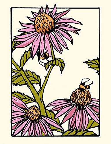 Sweet Echinacea: Unboxed Set of 6 Cards