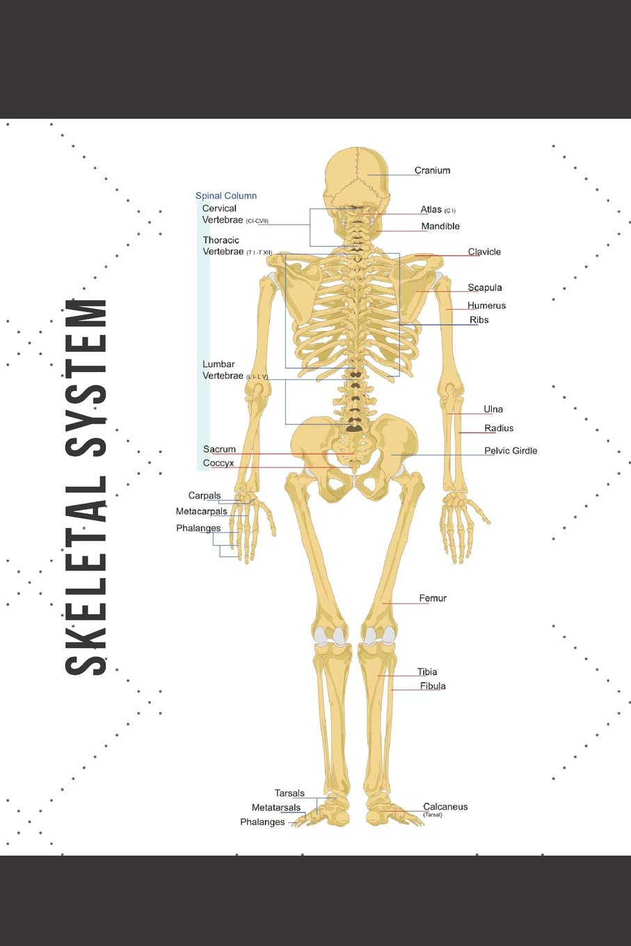 photo regarding Printable Skeletal System identify Skeletal Approach: Blank Line Magazine: Mary Lou Darling