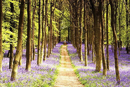 Woodland Path - Nature Poster/Print (Trees & Lavender) (Size: 36 inches x 24 inches)