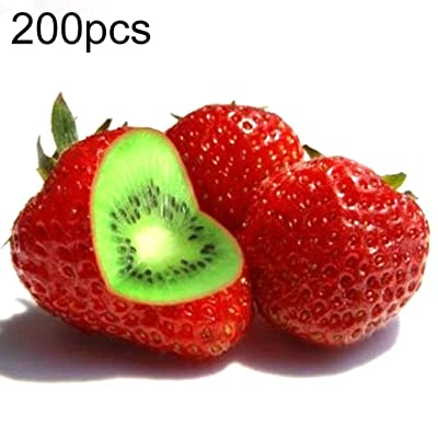 discountstore145 100/200/400Pcs Rare Strawberry Kiwi Seeds Organic Sweet Fruit Yard Bonsai Plant - 200pcs Strawberry Kiwi Seeds : Garden & Outdoor