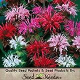 Seed Needs Package of 300 Seeds, Panorama Mixed Bee Balm (Monarda didyma) Non-GMO Seeds