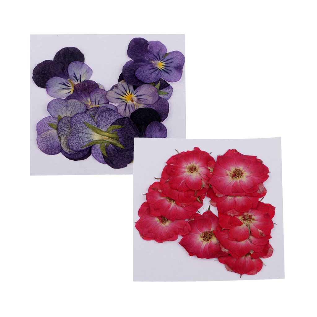 Amazon.com: Baoblaze 22 Pieces Pressed Flower Real Rose Violet Dried ...