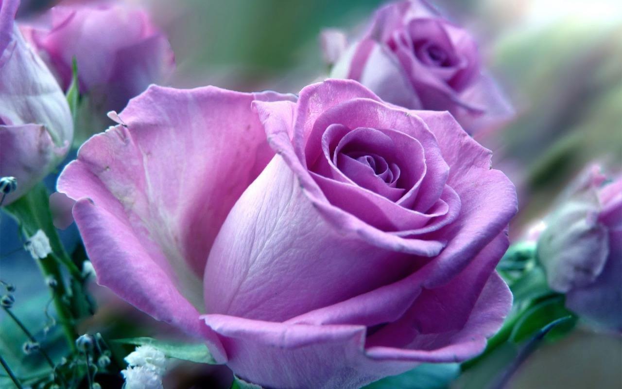 Light Purple ~ 20 Seeds ~ Rare ~