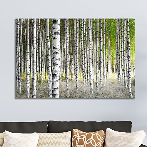 Birch Trees in Bright Sunshine in Late Summer Wall Decor ation