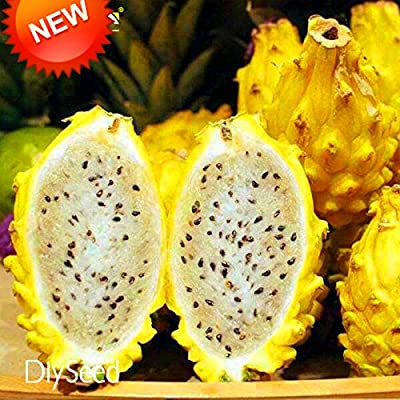 Best-Selling!100 PCS/Lot Yellow Pitaya Fruit Trees Seeds Perennial Plants Non-gmo Hylocereus Dragon Fruit Seeds, #IXJVEU : Garden & Outdoor