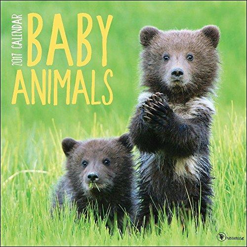 TF Publishing 2017 Baby Animals Wall Calendar (17-1000)