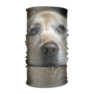 Lovely Labrador Dog DIY Pattern Headband Bandana Mask Sports Seamless Breathable Hair Band Turban For Workout, Fitness, Running, Cycling, Yoga