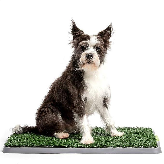Potty Patch - económico Perro Caja de Basura y Hierba Que Forma a su Cachorro de Parche y Mantener el hogar Limpio, pequeño - para Mascotas bajo 15 Libras: ...