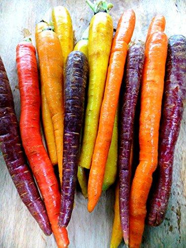 Bunten Karotte 100 Samen - Regenbogen Mix-weiß,gelb,orang,ro,lila