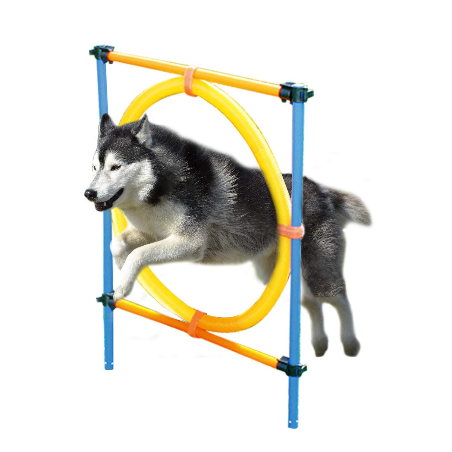 PAWISE Dog Agility Training Hoop, Outdoor Dog Agility Hurdle Toy Set by PAWISE
