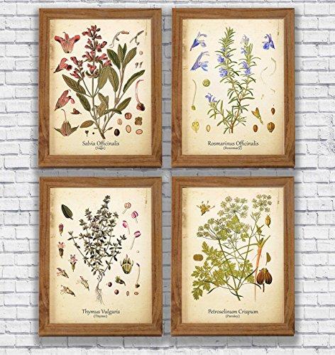 Vintage Herbs Print Set Rosemary Sage Thyme Parsley Wall Art Antique Botanical Art Plants Kitchen Decor ()